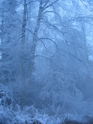 This hoare frost will get to be 6 inches thick