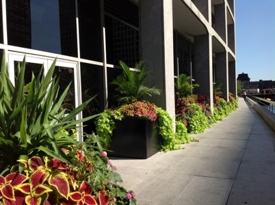 Beautiful Chicago flower boxes